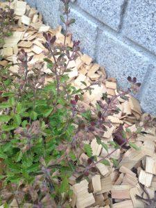 ウッドチップを敷き詰めた植栽